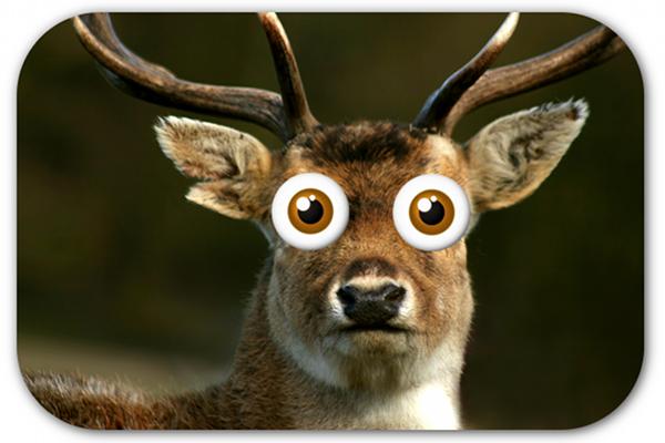 Name:  deer-in-headlights.jpg Views: 52 Size:  262.5 KB