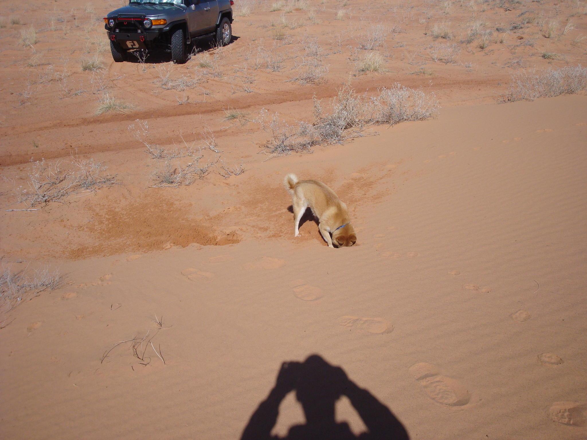 Moab Junky's Adventures-dsc03925.jpg