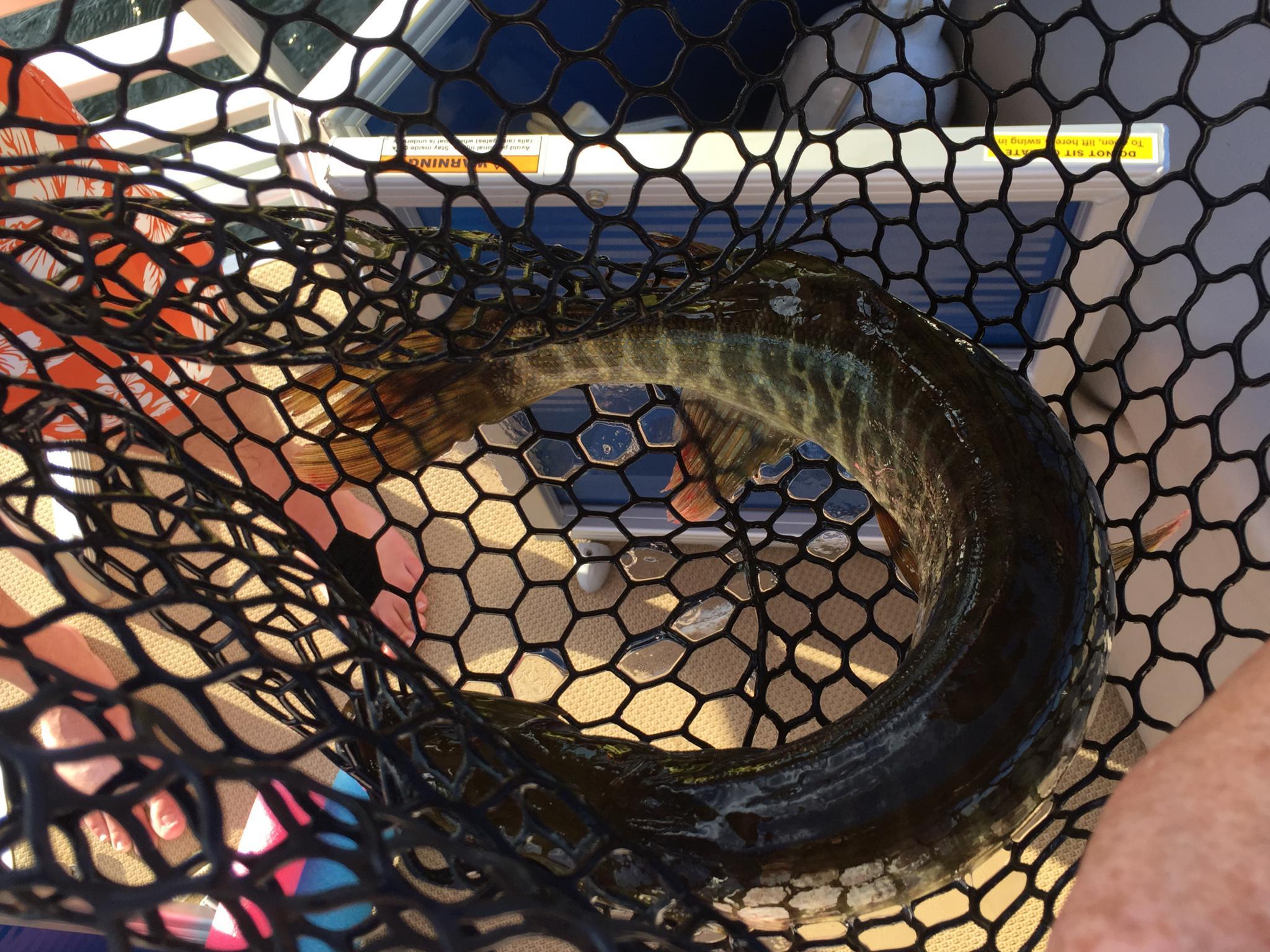 Fishing Pics - Time to Brag-img_5039.jpg